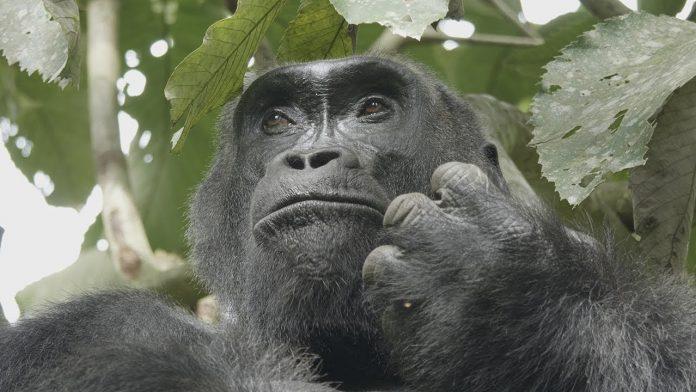 25th Anniversary of Nouabalé-Ndoki National Park | WCS Congo