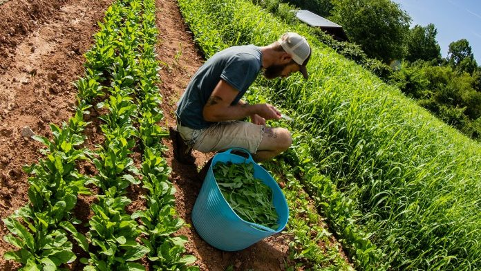Working Farms Fund
