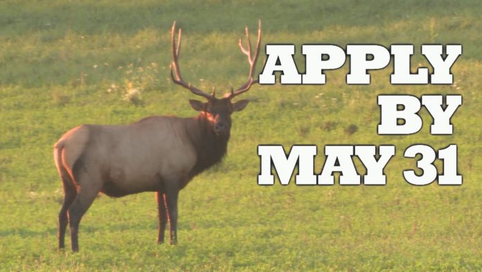Apply for the Elk-permit Lottery