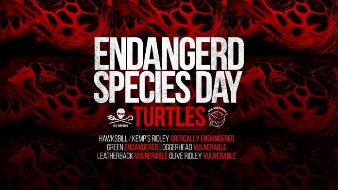 Endangered Species Week Feature Video: Sea Turtles