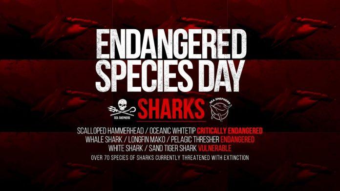 Endangered Species Week Feature Video: Sharks