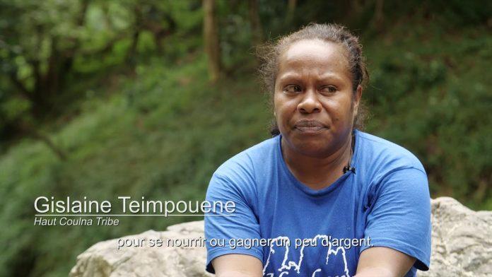 Le Mont Panié: Dernier combat pou ce Kaori sacréde Nouvelle-Calédonie