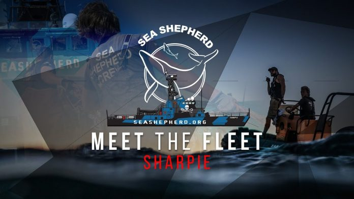 MEET THE FLEET - Sharpie