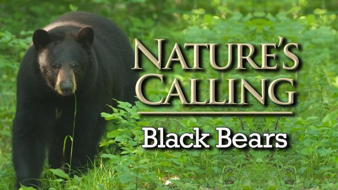 Nature's Calling - Black Bears (June - 2020)
