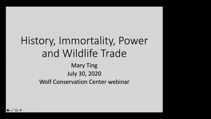History, Power, Immortality, and Wildlife Demand with Professor Mary Ting