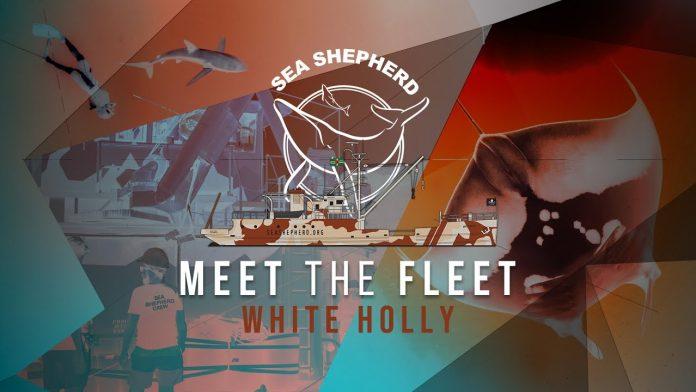 MEET THE FLEET - White Holly