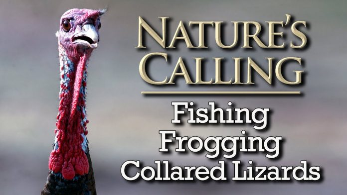 Nature's Calling - Fishing, Frogging, Collared Lizards (July 2020)
