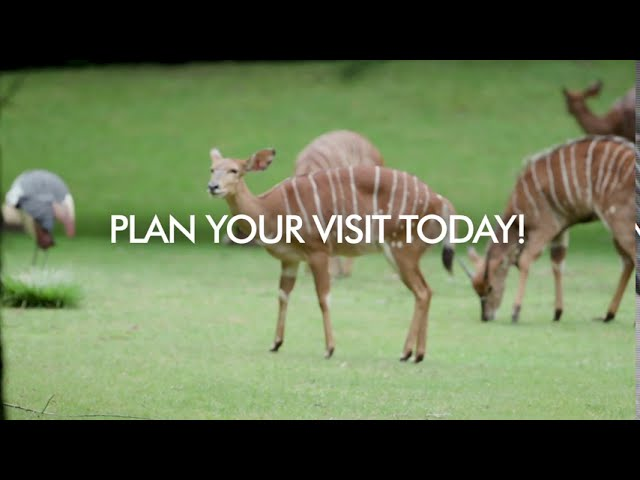 Plan Your Visit Today | WCS Zoos
