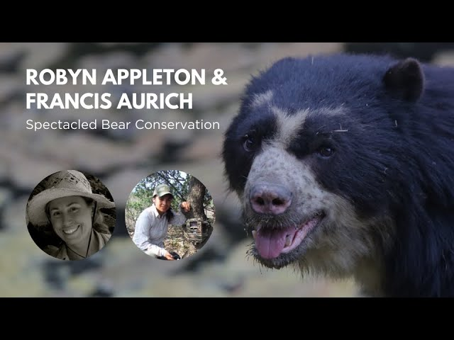 WCN Fall Expo 2019: Spectacled Bears