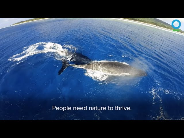 About Conservation International