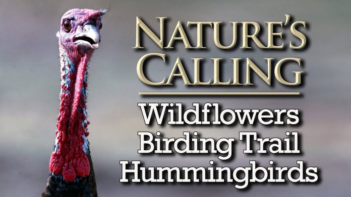 Natures Calling - Wildflowers, MO Birding Trail, Hummingbirds (Aug 2020)