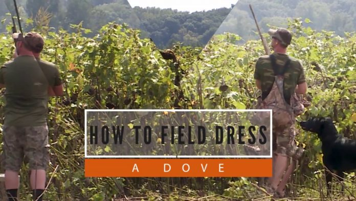 How To Field Dress a Dove