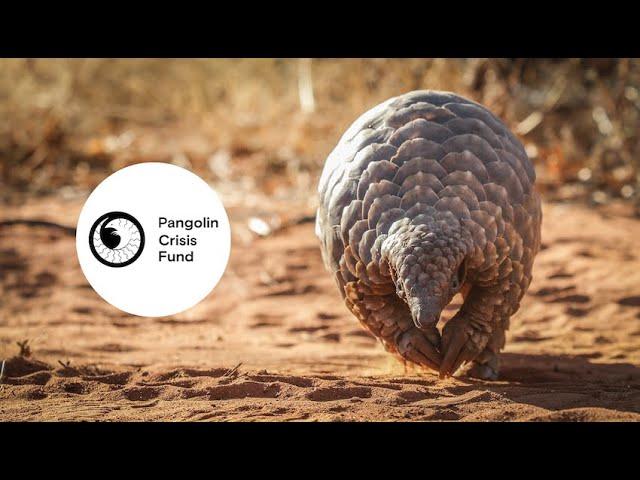 Pangolin Crisis Fund at WCN's Expo
