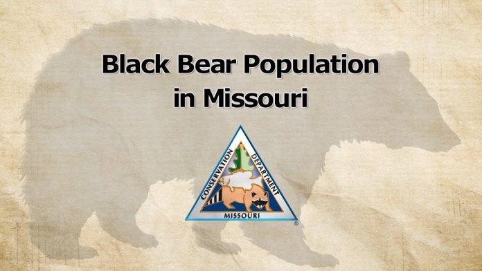 Black Bear Population in Missouri (2020)