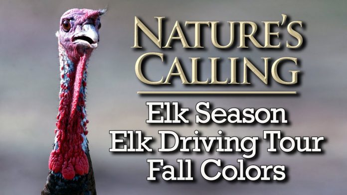 Nature's Calling - Elk Hunting Season, Elk Driving Tour, Fall Colors (Oct 2020)