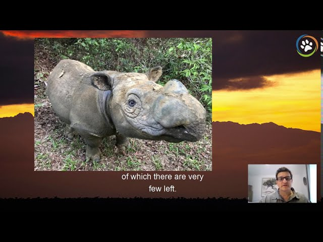WCN Virtual Expo 2020: Rhino Recovery Fund