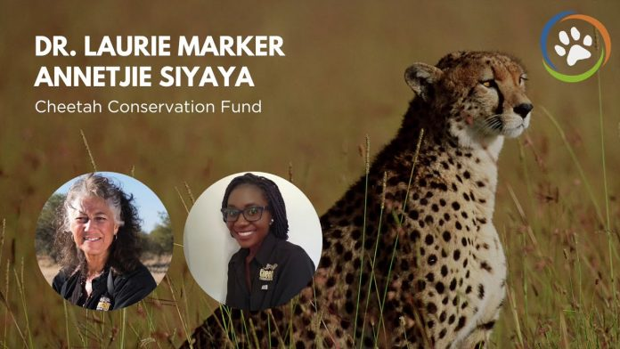 WCN Virtual Fall Expo 2020: Cheetah Conservation Fund