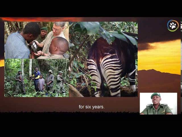 WCN Virtual Fall Expo 2020: Okapi Conservation Project