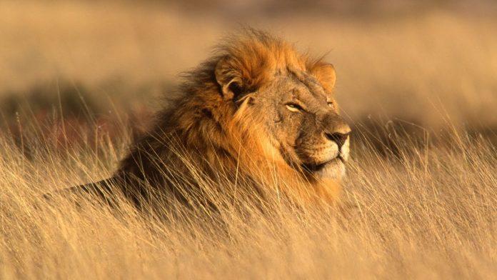 Wildlife Conservation Virtual Expo 2020