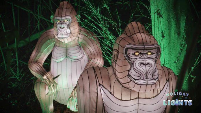 Holiday Lights 2020 | Bronx Zoo