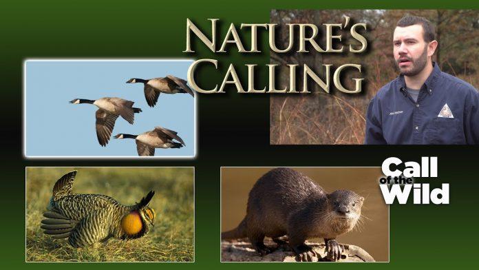 Nature's Calling - Call of the Wild (Dec 2020)