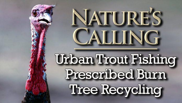 Nature's Calling (Jan 2021)