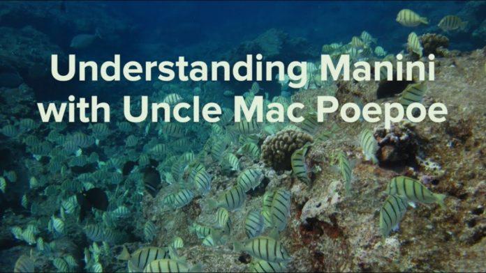 Ka leo o nā ʻōiwi, ke hoʻolohe nei anei ʻoe? Understanding Manini with Uncle Mac Poepoe