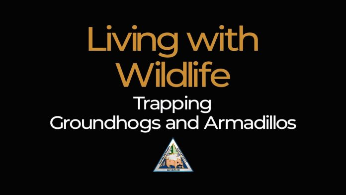 Living with Wildlife: Trapping Groundhogs and Armadillos