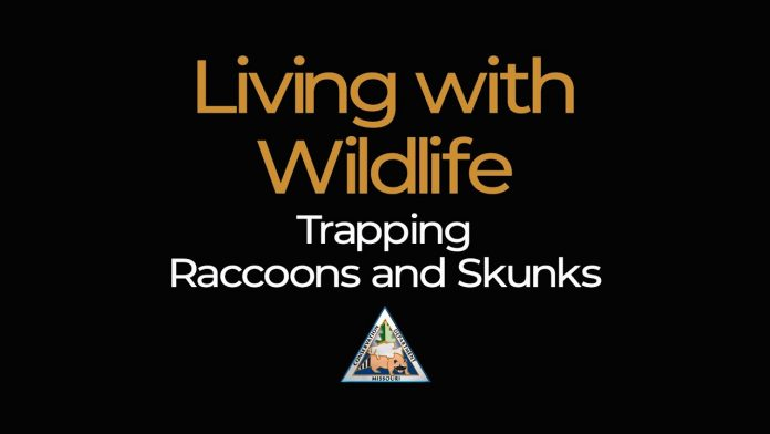 Living with Wildlife: Trapping Raccoons and Skunks
