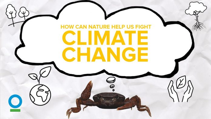 HOW CAN NATURE HELP US FIGHT CLIMATE CHANGE? - Climate Change #4 | CI Singapore
