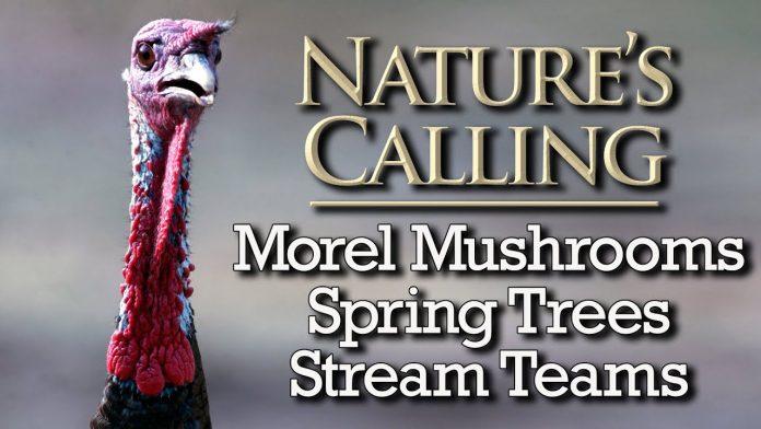 Nature's Calling - Morels, Spring Trees, Stream Teams (April 2021)