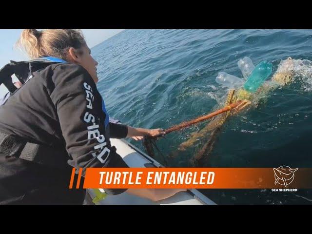 Sea Shepherd Rescues Turtle Entangled in Fishing Gear