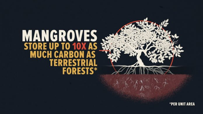 A New Lifeline for the World's Mangrove Forests?