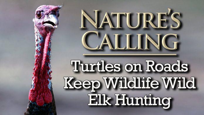 Nature's Calling - Turtles on Roads, Keep Wildlife Wild, Elk Hunting (May 2021)