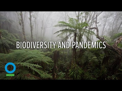 Biodiversity and Pandemics