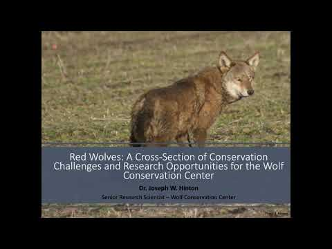 Red Wolves: A Cross-Section of Conservation Challenges & Research Opportunities, with J. Hinton PhD.